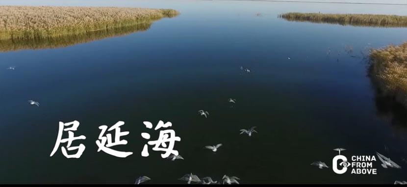 瞰中国 习近平两会上关注的这道风景线是什么颜色
