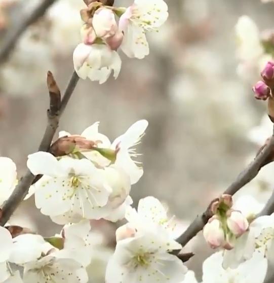 花开春来到
