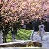 春日美丽画卷