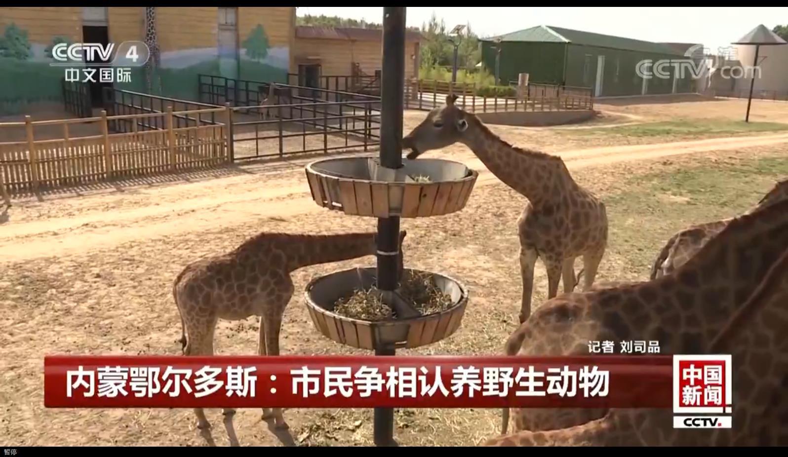 市民认养野生动物