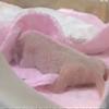 全球最小熊猫宝宝
