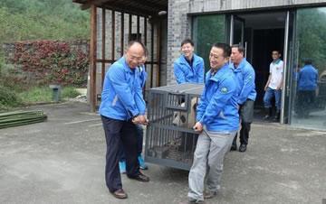 """大熊猫在湖北神农架安""""新家"""""""