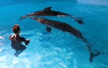 """两头宽吻海豚""""定居""""哈尔滨"""