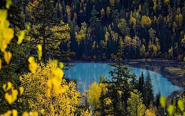 新疆喀纳斯:秋景入画来