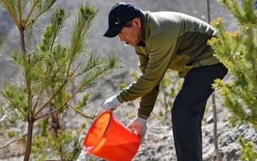 西藏启动大规模国土绿化行动