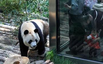 贵阳黔灵山公园熊猫馆开馆
