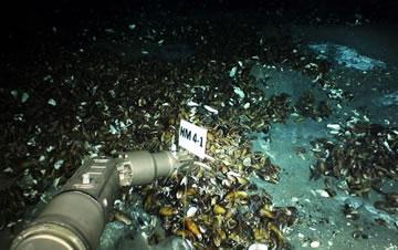 """到南海探秘海底的""""生命绿洲"""""""