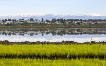 新疆伊犁河谷尽显稻田生态之美