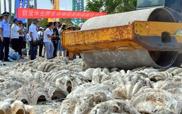 海南销毁40吨罚没水生野生动物及其制品