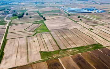 北方昔日盐碱地 今日种上了有机水稻