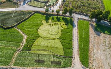 巧手农民创意多 稻田种出HelloKitty和小猪佩奇