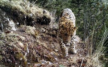 红外相机拍摄到多种野生动物画面