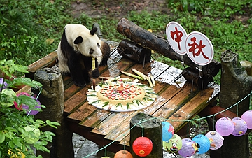 重庆:手工月饼送给大熊猫