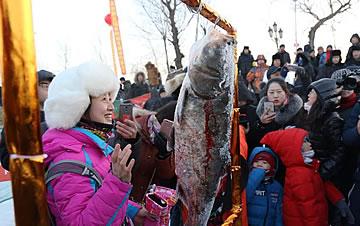 长岭湖冬捕新体验 万斤鲜鱼一网收