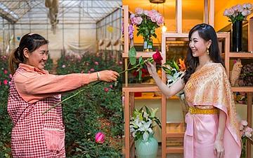 从云南田间到泰国花店――云南鲜花的南洋之旅