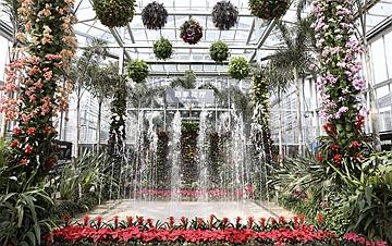 """北京最""""年长""""植物温室重新开放"""