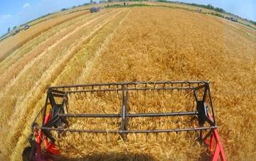 今年夏粮收获近八成 丰收已成定局