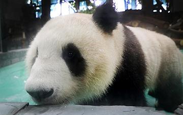 """大熊�""""�L光兄弟""""光�R上海"""