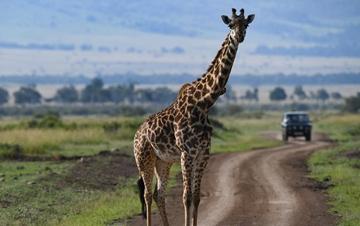 肯尼亚马赛马拉国家保护区掠影