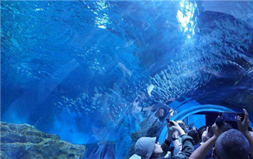 世界海拔最高的大型综合海洋馆在西宁市试营业