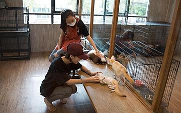 探访曼谷动物咖啡馆
