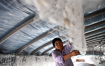 安徽肥西:小蚕桑 大产业