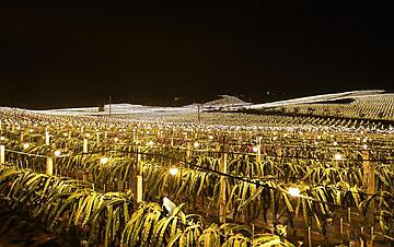 """广西隆安:现代农业""""点亮""""绿色田园"""