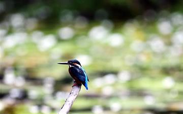 亲近自然 乐享鸟趣