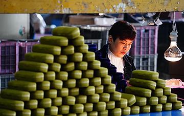 河北新河:小小眼镜盒 托起群众就业脱贫梦