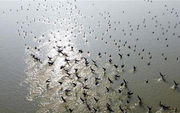 安徽:冬日湿地 候鸟纷至
