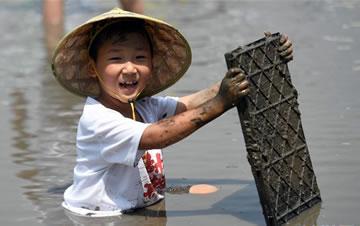 浙江湖州:亲子插秧 体验农事