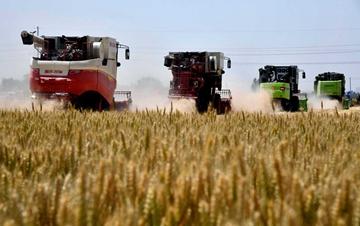 河北、山东、安徽小麦陆续开镰收割