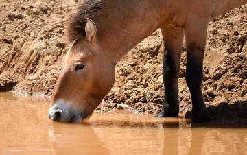 """新疆卡拉麦里""""补水行动""""帮助野生动物抗旱"""