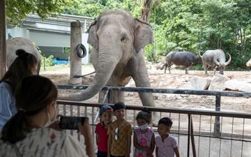 泰国动物园免费向民众开放
