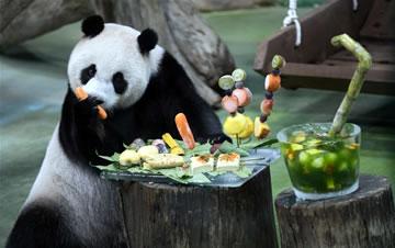"""台北:大熊猫""""圆仔""""迎来7岁生日"""