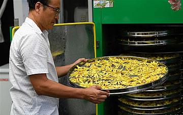 """浙江湖州:香水莲花""""盘活""""水产池塘"""