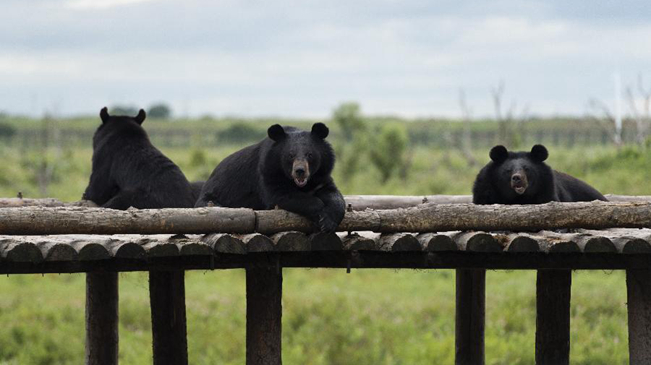 探访黑瞎子岛国家级自然保护区