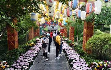 河南开封:古城菊香迎客来