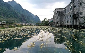 广西都安:深秋时节花满河