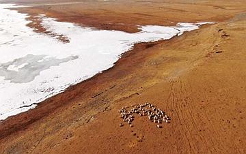 雪后青海湖