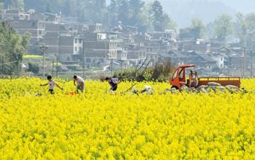 贵州:春耕备耕 不误农时