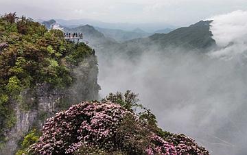 汉中龙头山:云中杜鹃更娇美