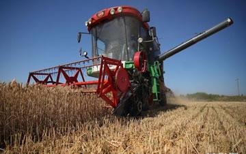河北小麦开镰收割