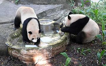 """重庆:动物园里的""""清凉夏日"""""""
