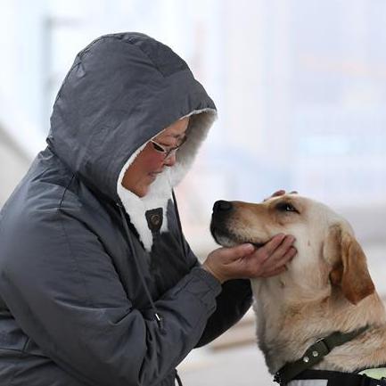 导盲犬乘高铁