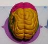 人类祖先大脑