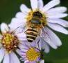 避免蜜蜂黄蜂侵扰