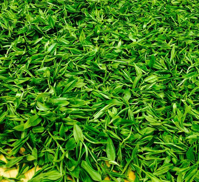 喝绿茶的误区