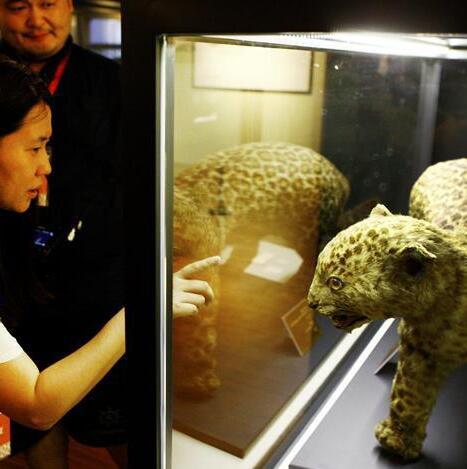 上海博物溯源特展