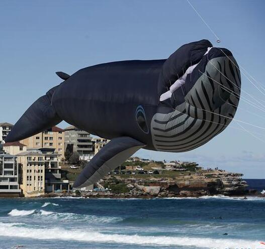 悉尼风筝节